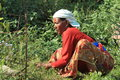 Woman are gardening a from nepal is Royalty Free Stock Photography