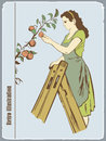 The woman gathers apples retro an illustration from a tree Stock Photos