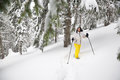 Woman goes on snowshoes on the coniferous forest Royalty Free Stock Photo