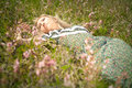 Woman on a grass and flower portrait Royalty Free Stock Photography