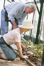 Woman in greenhouse planting seeds and a man Royalty Free Stock Images