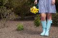 Woman in gumboots carrying yellow daffodils trendy blue a bunch of fresh spring that she has just picked the garden view of her Royalty Free Stock Photo