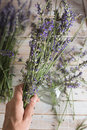 Woman hand holding a bouquet of natural lavenders