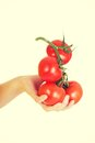 Woman hand holding bunch of tomatoes. Royalty Free Stock Photo