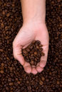 Woman hand holding coffee beans Royalty Free Stock Image