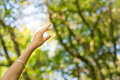 Woman hand reaching towards nature and sky Royalty Free Stock Photo