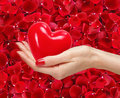Woman hand with red heart on beautiful red rose petals Royalty Free Stock Photo