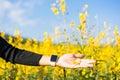 Woman hand touching yellow flowers Royalty Free Stock Photo