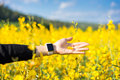 Woman hand touching yellow flowers