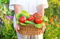 Woman hands holding a basket full of vegetables in the garden