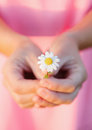 Woman hands holding a beautiful daisy Royalty Free Stock Photo