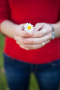Woman hands holding a daisy. Focus in the flower Royalty Free Stock Photo