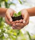 Woman hands holding plant in soil Royalty Free Stock Photo