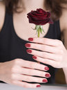 Woman hands holding red rose Royalty Free Stock Photo