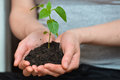 Woman hands holding young plant in fertil soil. Ecology concept Royalty Free Stock Photo
