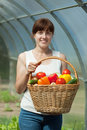 Woman with  harvested vegetables in greenhouse Stock Photo