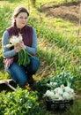 Woman harvesting fresh green onion Royalty Free Stock Photo