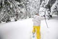 Woman hiker goes on snowshoes on the coniferous forest Royalty Free Stock Photo