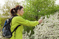 Woman hiker taking photo of a blossoming tree by smartphone Stock Photo