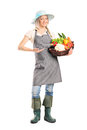 Woman holding a basket full of vegetables length portrait isolated on white background Royalty Free Stock Photography