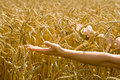 Woman holding out arms towards wheat Royalty Free Stock Photography
