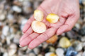 Woman holding seashells Royalty Free Stock Photo