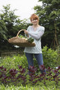 Woman Holding Vegetable Basket In Garden Royalty Free Stock Photo