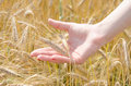 A woman holding wheat hoding in field Royalty Free Stock Image