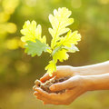 A woman holding young oak tree in hands against spring green background environmental protection concept Stock Images