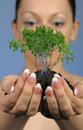 The woman holds in hands soil with a tree Stock Photography