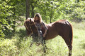 Woman and horse in field a young a brown standing an opening a forest Royalty Free Stock Photo