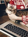 Woman hugging and petting cute cat and holding laptop in room in Royalty Free Stock Photo