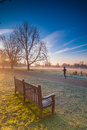 Woman jogger during a morning winter jog at a park Royalty Free Stock Images