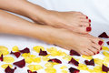 Woman legs in rose petals Stock Images