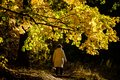 A woman in a light jacket is walking along a yellow maple avenue Royalty Free Stock Photo