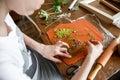 Woman making botanical plaster artwork in her home studio.
