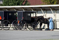 Woman and Old fashioned Amish horse and buggy Royalty Free Stock Photo