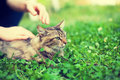Woman pets cat Royalty Free Stock Photo