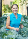 Woman  in plant of cabbage Stock Photo