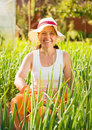 Woman  in plant of onion Stock Photos