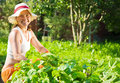 Woman  in plant of pea Stock Photo