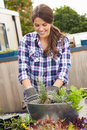 Woman Planting Container On Rooftop Garden Royalty Free Stock Photo