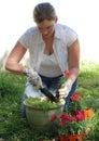 Woman Planting Flowers