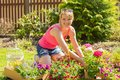 Woman planting roses in garden Royalty Free Stock Photo