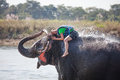 Woman plays with elephant in river Royalty Free Stock Photos