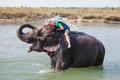 Woman plays with elephant in river Stock Photography