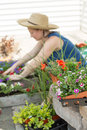 Woman potting plants on a hot spring day and nursery seedlings into decorative flowerpots sitting in the shade her outdoor Stock Images