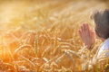 Woman pray for a rich harvest in wheat field Stock Images