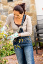 Woman pruning autumn tree clippers garden hobby bush veranda clipping gardening Stock Photos