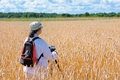 Woman pursuing research wheat field Royalty Free Stock Photography